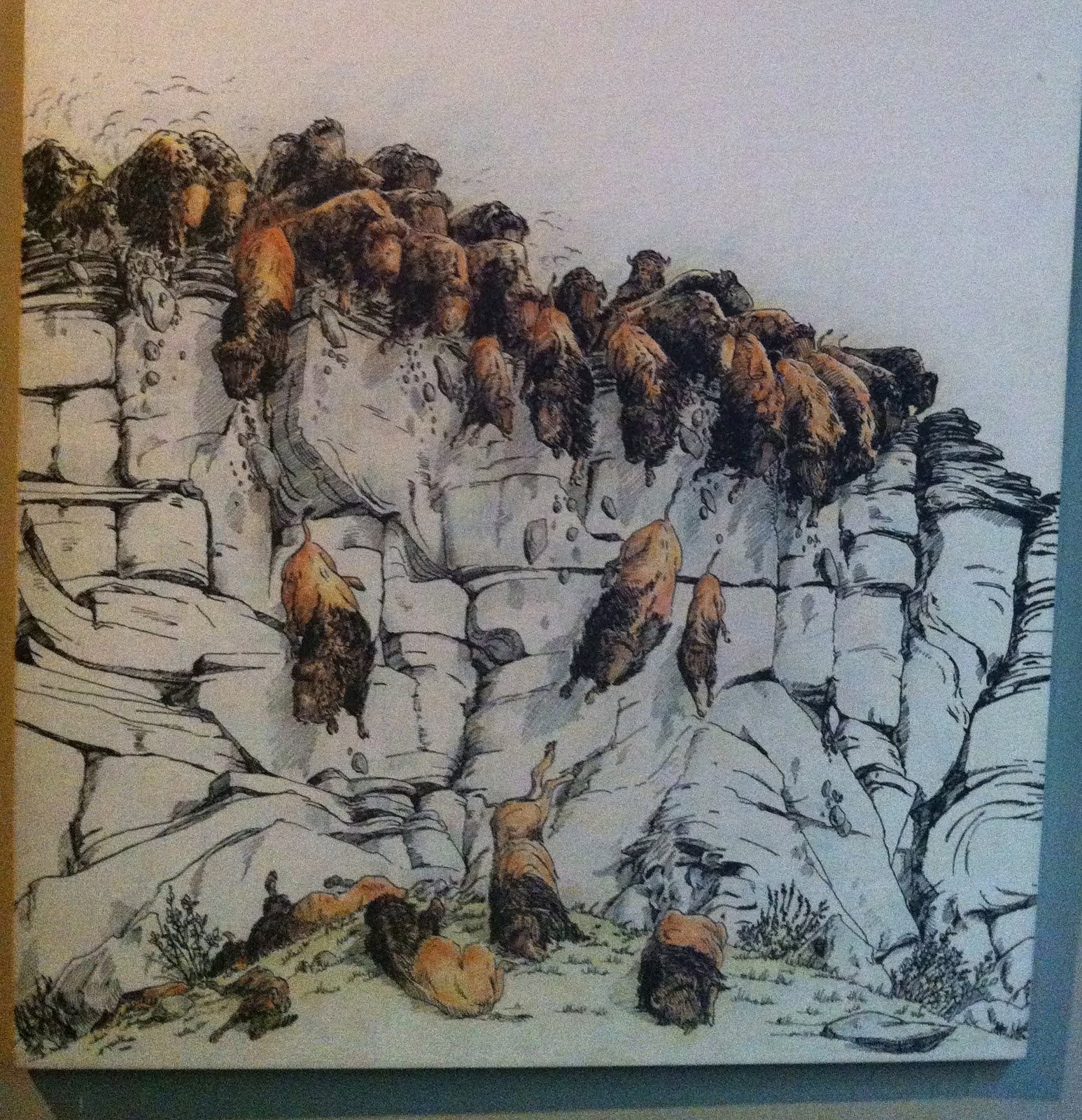 Buffalo stampede over a cliff